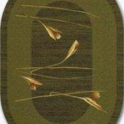 Апус кхаки овал (Apus khaki)